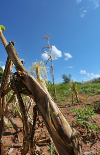 ジンバブエ、干ばつで「災害事態」宣言
