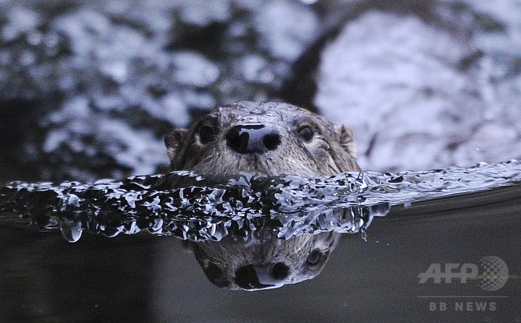 世界の生物多様性を脅かす「侵入生物種」の脅威
