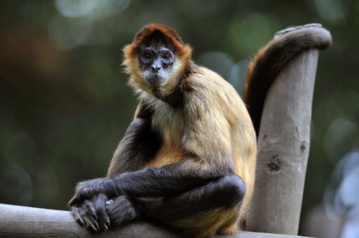 コスタリカ、老舗動物園の個性豊かな動物たち
