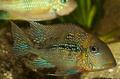 アマゾン熱帯雨林で新種400種近く発見 WWF