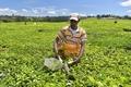 ケニアの茶産業、気候変動で壊滅的打撃か 分析
