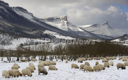 欧州の大寒波、死者300人超える  孤立した村で出産も