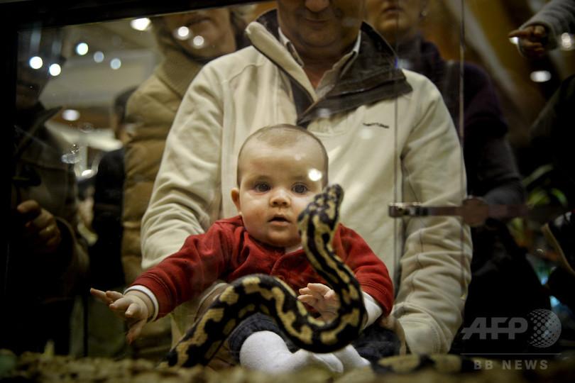 ペットの爬虫類、乳幼児にサルモネラ感染リスク 英研究