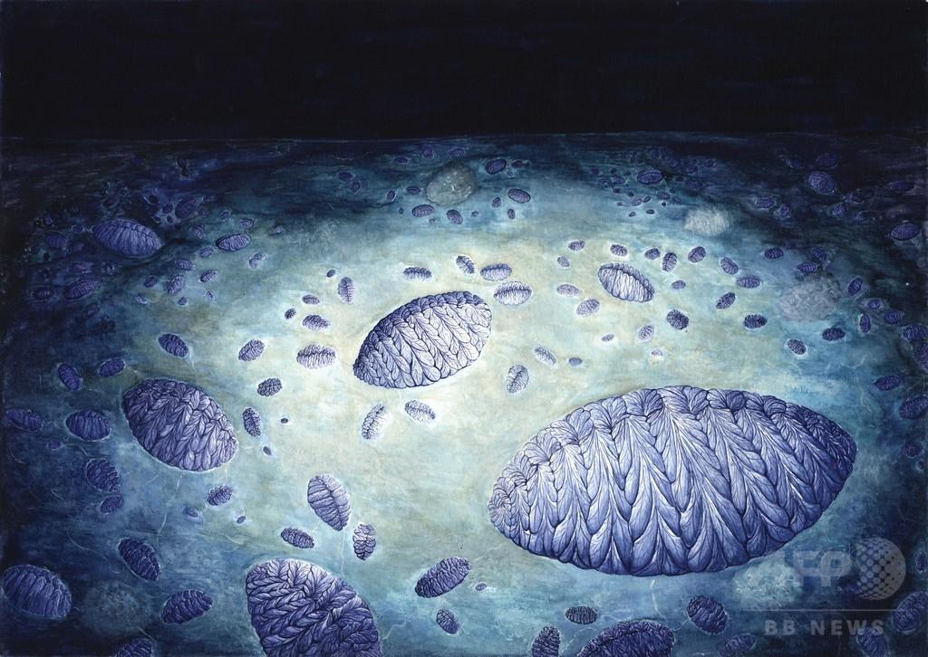 複合生物の有性生殖、5億6500万年前に始まった可能性 研究