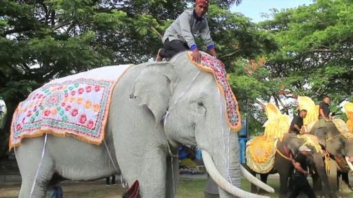 動画:スマトラゾウたち悠々とパレード、衣装に身包み インドネシア