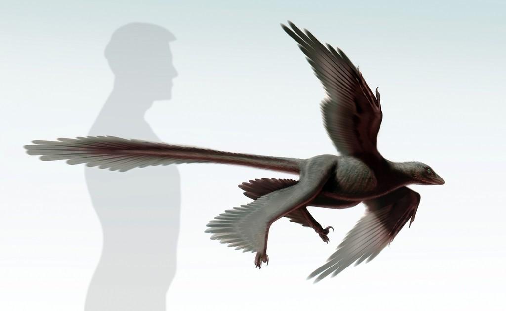 中国で発見の「四翼」恐竜の化石、鳥類の進化解明のカギに 研究