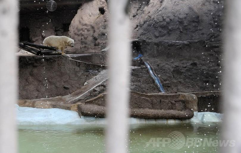悲しみに暮れるホッキョクグマ、カナダ移住に回復の望み