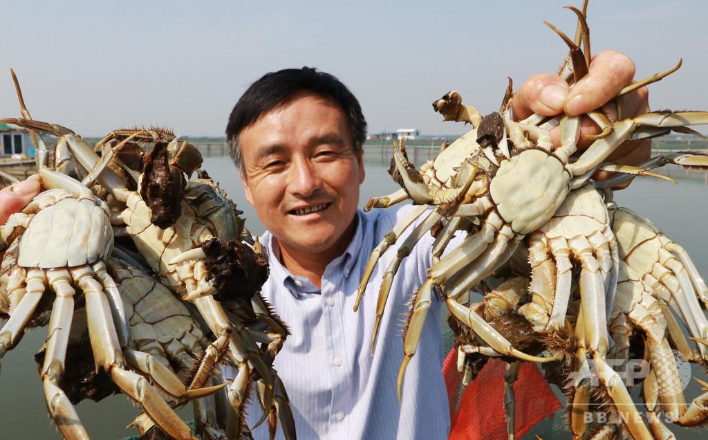 陽澄湖と太湖のカニ漁解禁、環境保護の圧力の中も漁師ら奮闘