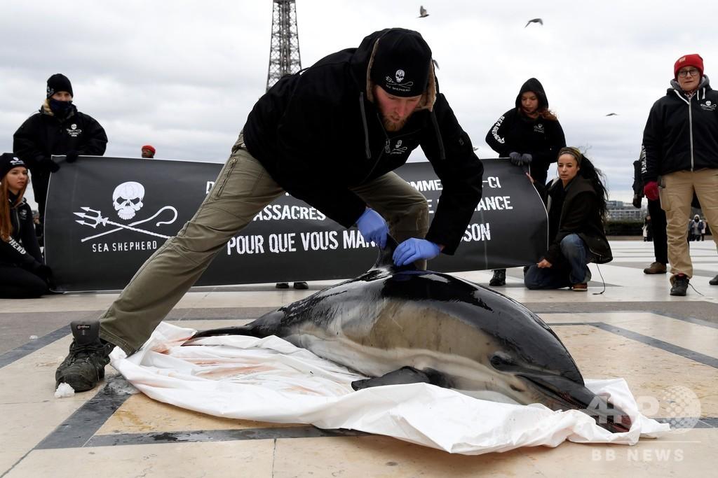 反捕鯨団体シー・シェパード、トロール漁によるイルカの死を告発