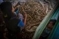 コロナ禍のアジアで急増する児童婚、犠牲となる少女らの夢