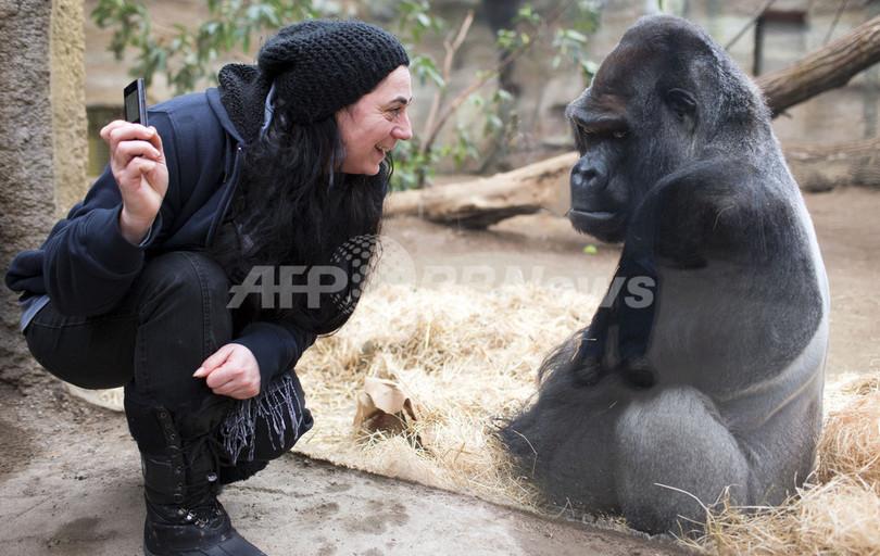 ゴリラの女の子、人間に興味津々?ドイツの動物園