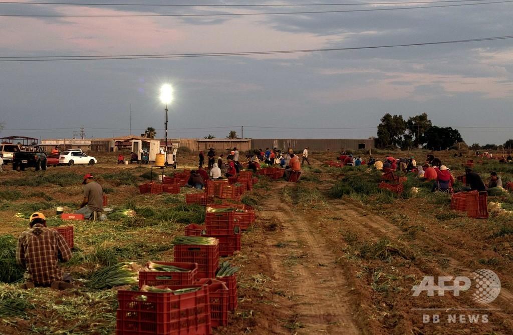 新型コロナに続き「世界的食料危機」の恐れ、国連とWTOが警告