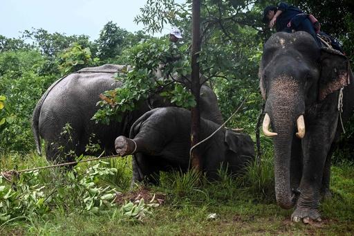 おなかがすいて村や高速道路をウロウロ… 野生ゾウを保護 ミャンマー