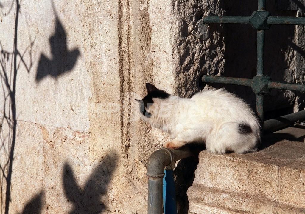 「好奇心はネコをも殺す」 オーストラリアの野良ネコ駆除作戦