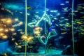 魚と優雅に競演、中国の水族館で水中ポールダンス披露