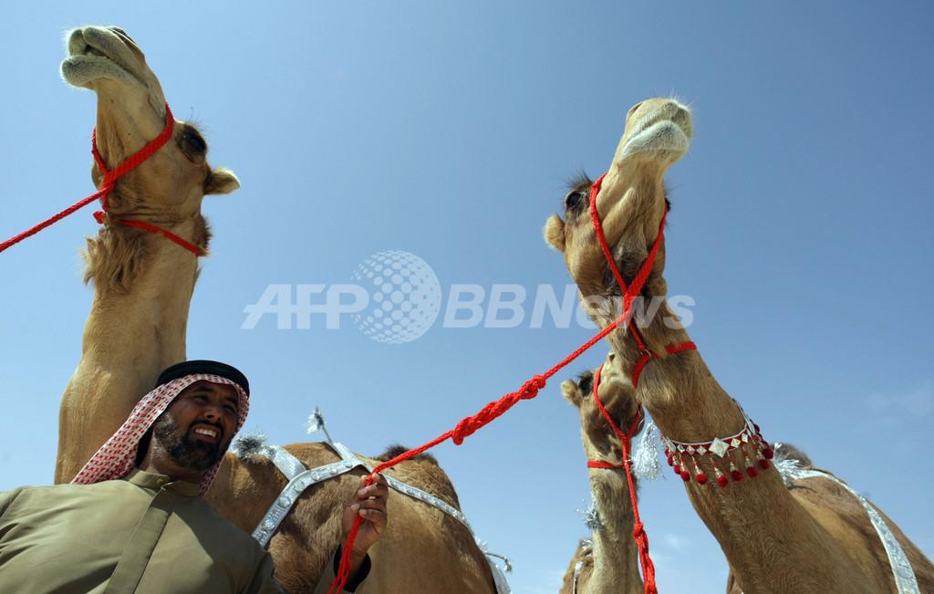 ラクダ3頭に6億円、UAEの競売で