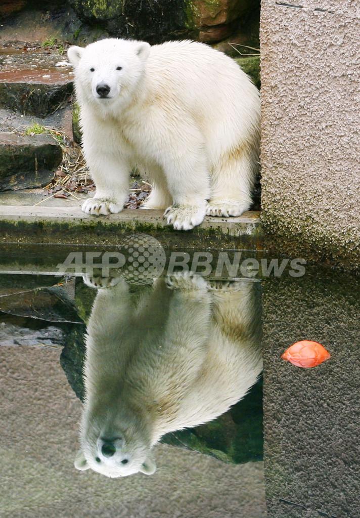 フロッケに双子の兄弟誕生、独動物園に新たなクマのスター?