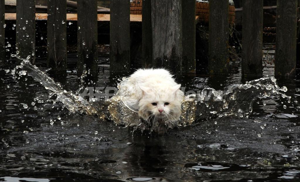 まるで水郷、洪水に見舞われたベラルーシの農村部