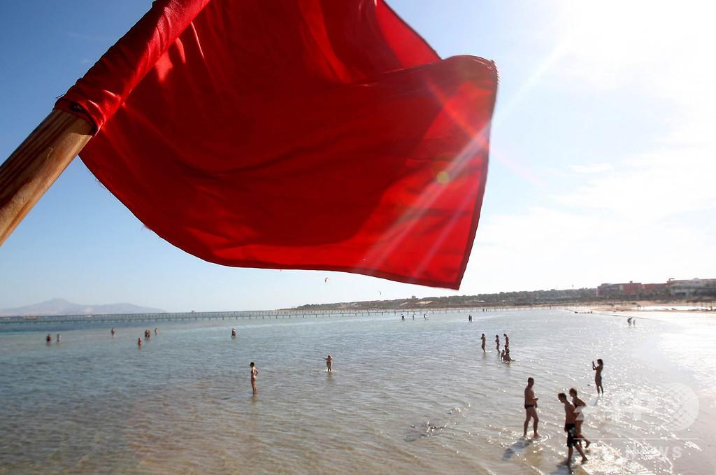 サメに襲われ観光客死亡、エジプト紅海沿岸