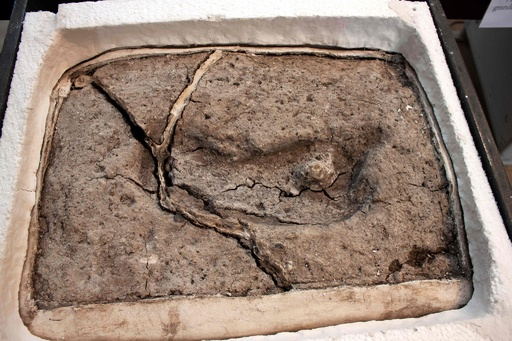 1万5600年前のヒトの足跡発見、 南北米大陸で最古 チリ