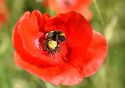 殺虫剤でハチの社会性低下、幼虫の世話せず非活動的に 研究