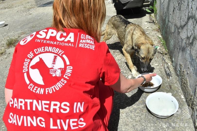 「健康で賢い」チェルノブイリの子犬、保護されて米国の里親の元へ