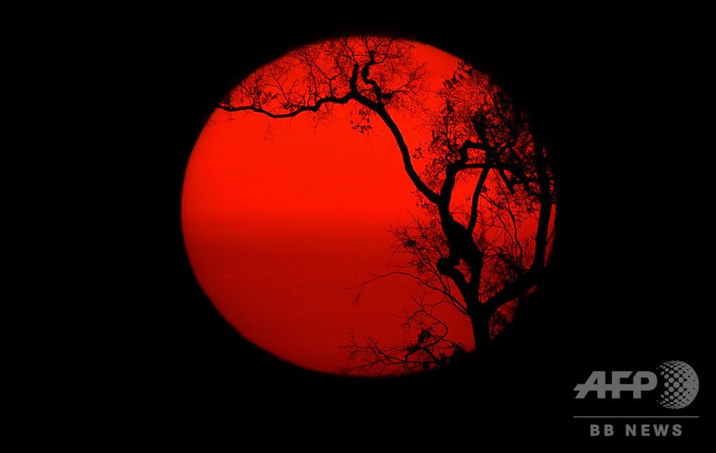 【今日の1枚】焼け野原に沈む夕日 アマゾン森林火災