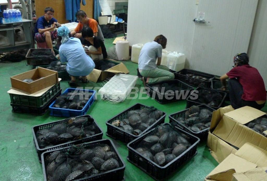 希少種のカメの保護区新設へ、相次ぐ大規模押収受け 台湾