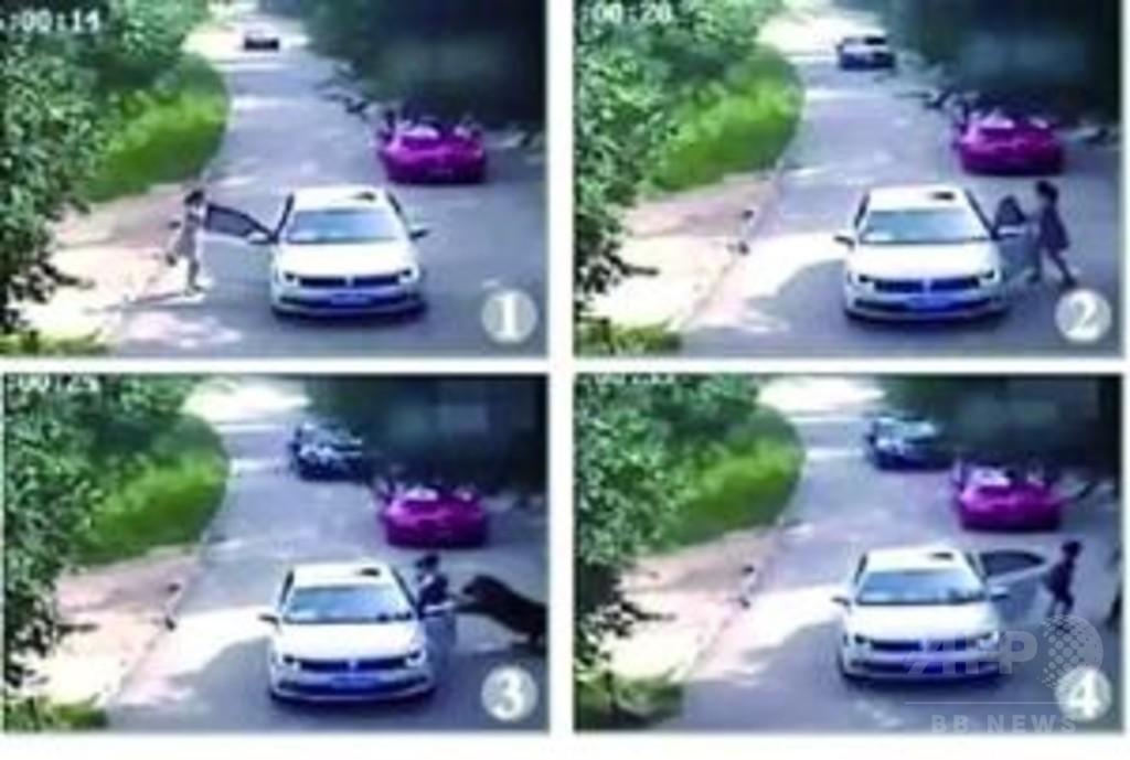 北京のサファリパーク死傷事故、園側に責任無し 被害者側の賠償請求に対し延慶法院