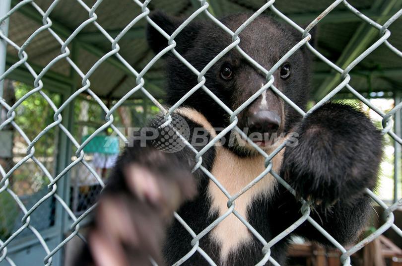 ベトナムのクマを救え、残虐な違法取引阻止を目指すセンター開設