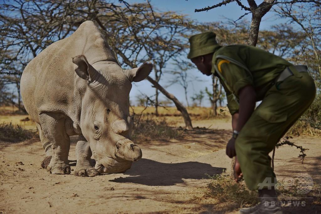 地球上に残り5頭、キタシロサイの絶滅を防げ 専門家が会議