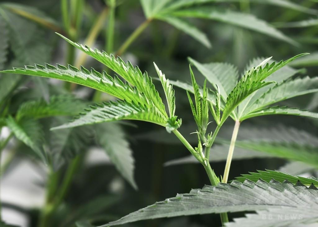 大麻由来のてんかん治療薬を初承認、米FDA
