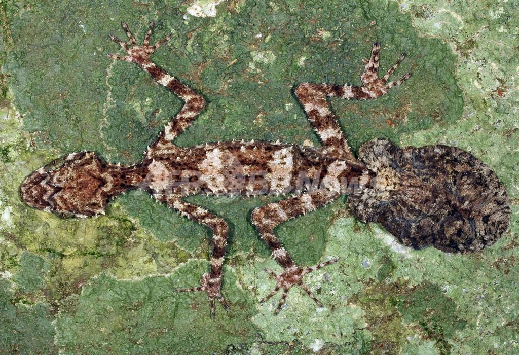 豪州辺境に「ロストワールド」、探検隊が新種3種を発見