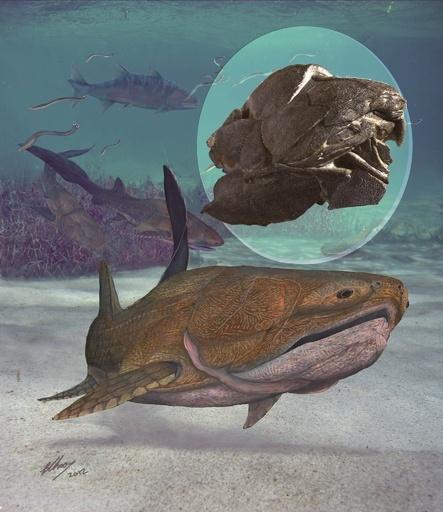 人類進化の定説覆す魚類化石、中国で発見