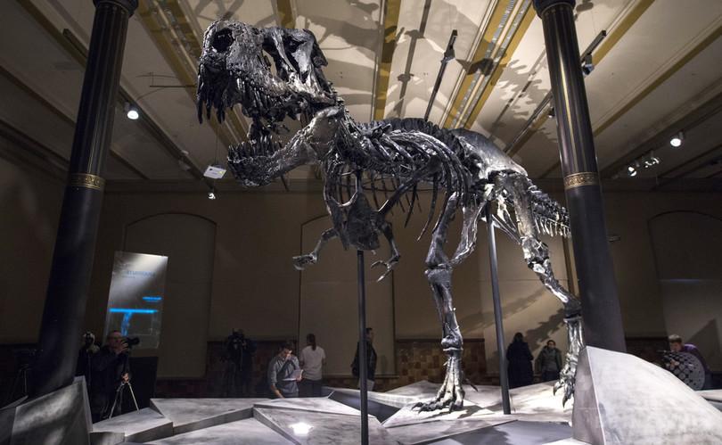 哺乳類、恐竜絶滅のはるか昔から繁栄 通説覆す論文