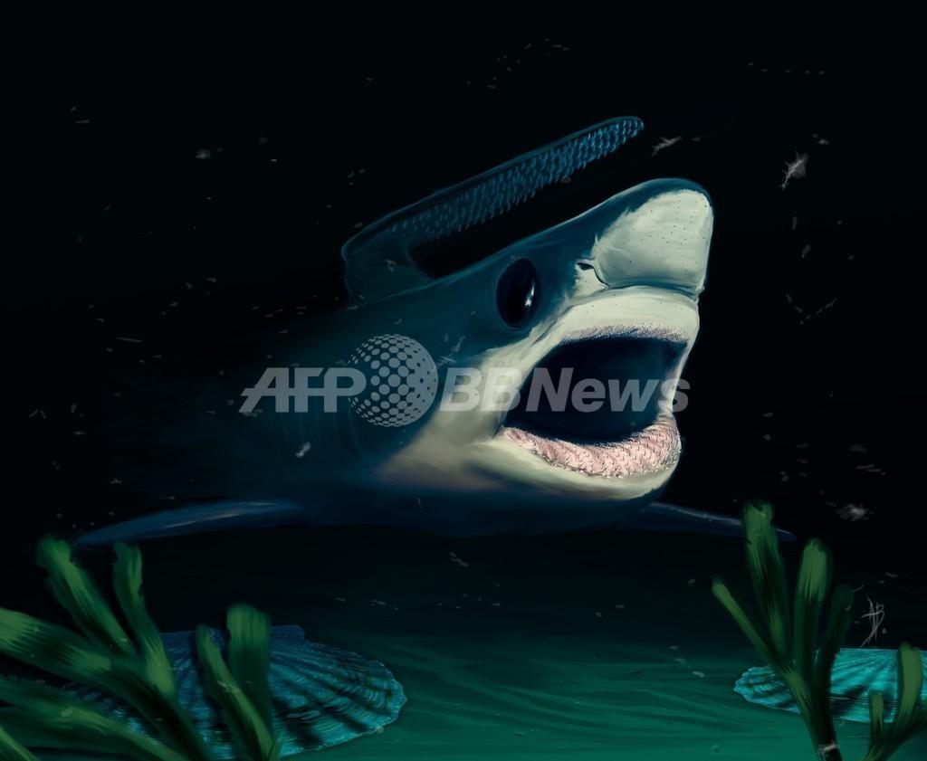 古代の小型サメ、大量絶滅を生き延びていた可能性 研究