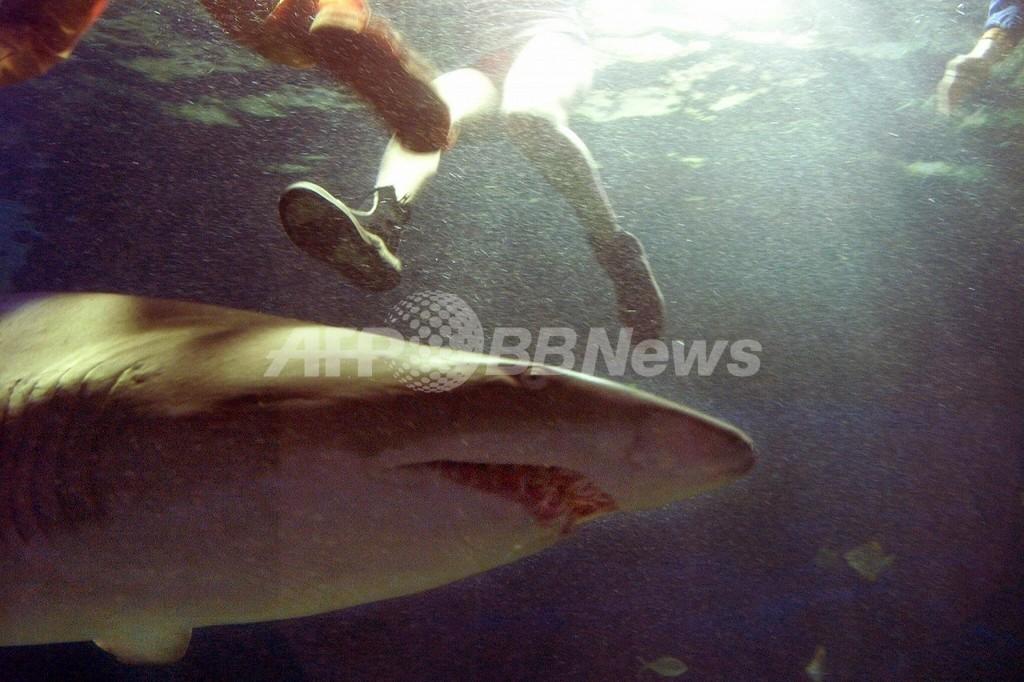 人を脅かすサメに「予防的措置」、ウエスタンオーストラリア州
