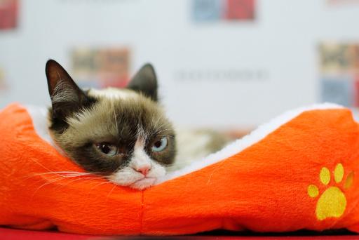 「不機嫌ネコ」のグランピー死ぬ、7歳