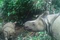 絶滅危惧のジャワサイ 子ども2頭を確認 種の存続への期待高まる