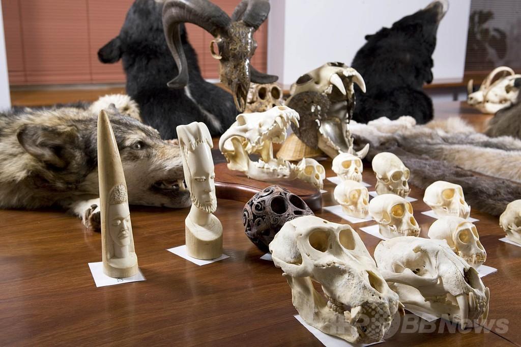野生動物の頭骨など78点、隠し持っていた男が有罪 豪