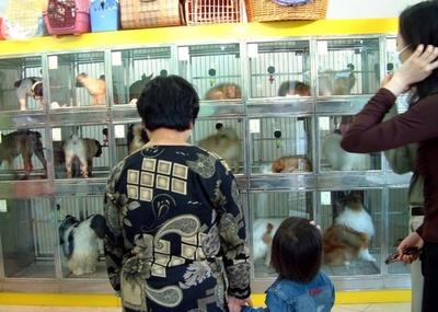 中国のペット市場3兆円迫る 飼い主は7355万人