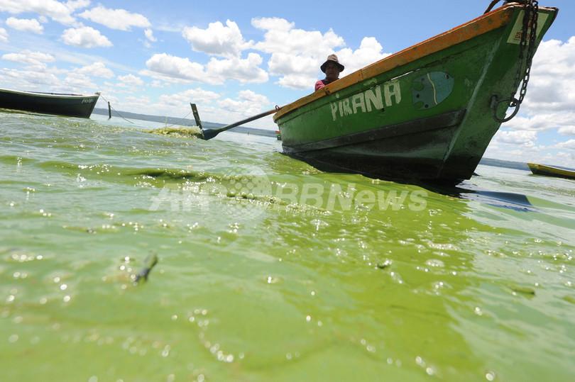 藻が大量発生、緑に染まったパラグアイの湖