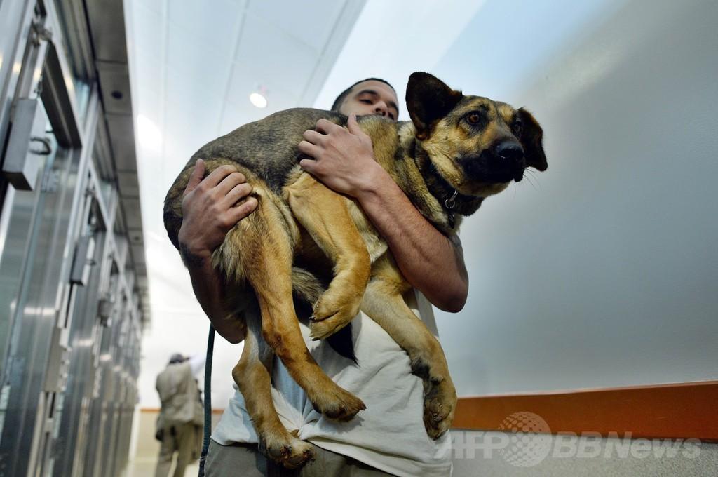 ソチ五輪で救助された野良犬10匹、米首都に到着