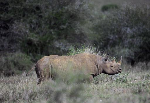 4200万円でクロサイ猟の権利獲得、米男性がナミビアで猟実行