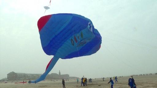 動画:長さ世界一! 150メートルのたこ空へ 仏で国際たこ揚げ大会