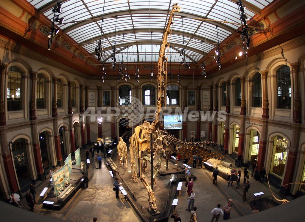 2億年前の大型恐竜、本当は重くなかった 英米研究