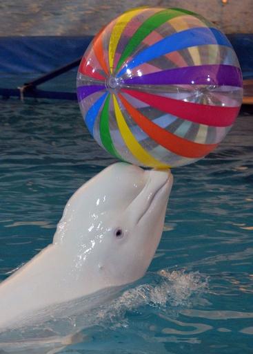 海のないキルギスでイルカショーに歓声、動物虐待の議論再燃も
