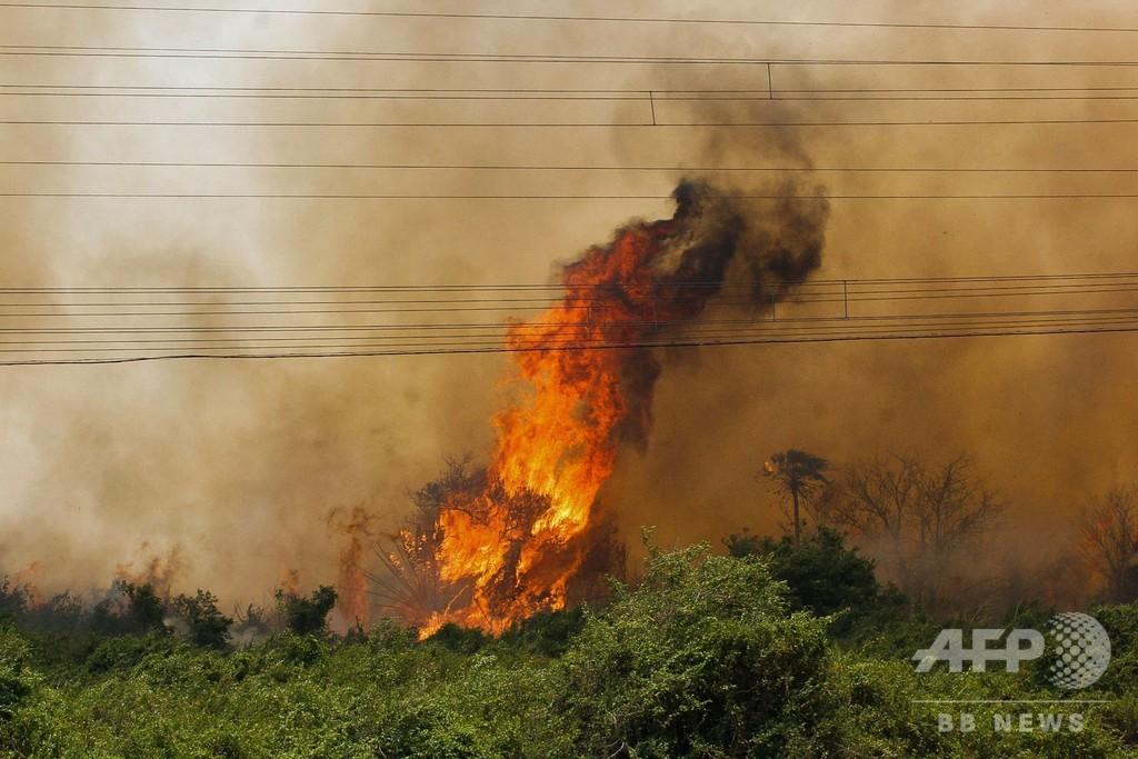 ブラジル・パンタナル湿原で大火災 生物多様性の高さで世界有数