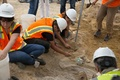 工事現場でトリケラトプスの化石見つかる、米コロラド州