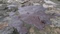 鹿児島県の宝島に「油のようなもの」漂着、沈没タンカーから流出か